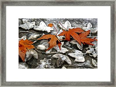 Coming To Life Framed Print by Off The Beaten Path Photography - Andrew Alexander