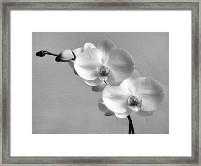 Commitment Framed Print by Wim Lanclus
