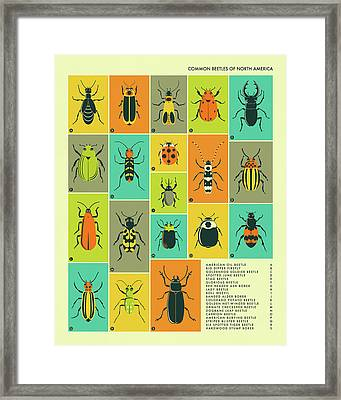 Common Beetles Of North America Framed Print by Jazzberry Blue