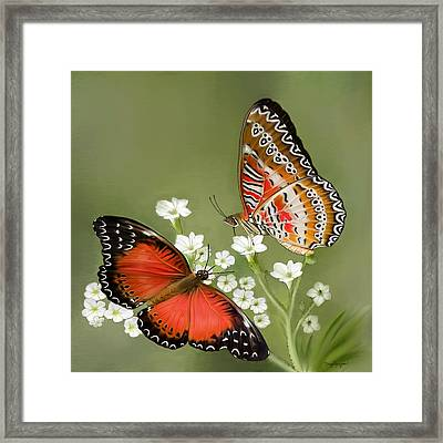 Common Lacewing Butterfly Framed Print by Thanh Thuy Nguyen