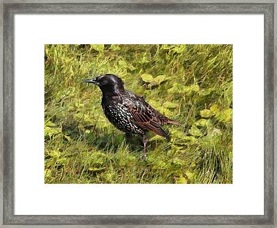 Common Starling Framed Print by Sergey Lukashin