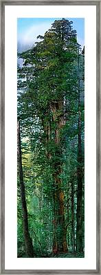 Composite Image, 310 Foot With Most Framed Print by Michael Nichols
