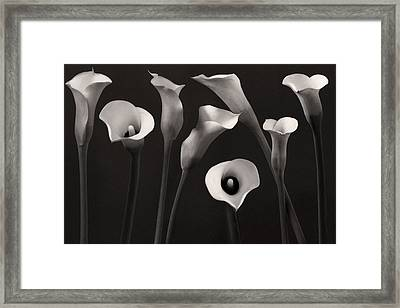 Composition With Calla Lily Framed Print by Floriana Barbu