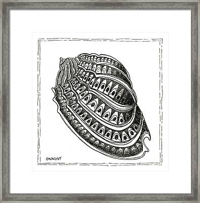 Conch Shell 1 Framed Print by Stephanie Troxell