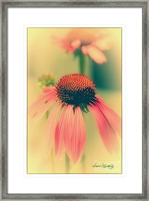 Coneflower Framed Print by Susan  Lipschutz