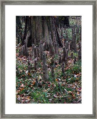 Congraee Swamp Nat'l Park Framed Print by Skip Willits