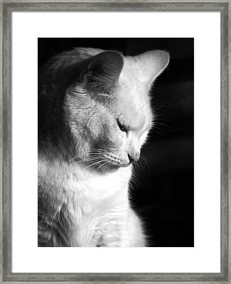 Contempation  Framed Print by Bob Orsillo