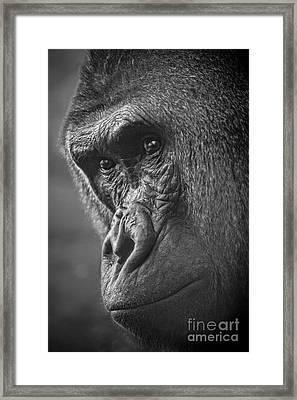 Contemplate Framed Print by Jamie Pham