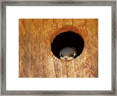 Contemplation Framed Print by Jean Noren