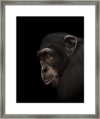 Contemplation Framed Print by Paul Neville