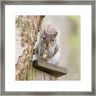 Contented Squirrel Framed Print by Natalie Kinnear