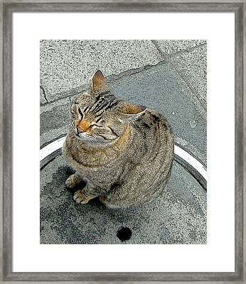 Contentment Framed Print by Mindy Newman