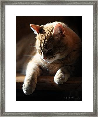 Contentment Framed Print by Renee Forth-Fukumoto