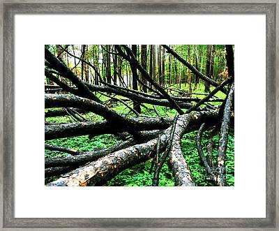 Controlled Burn Framed Print by Chuck Taylor