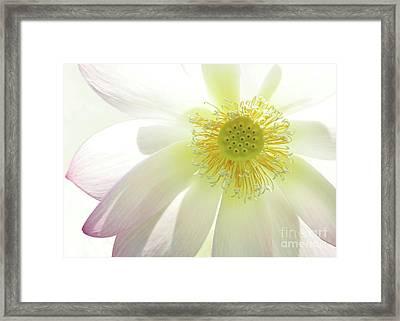 Cool Lotus Framed Print by Sabrina L Ryan