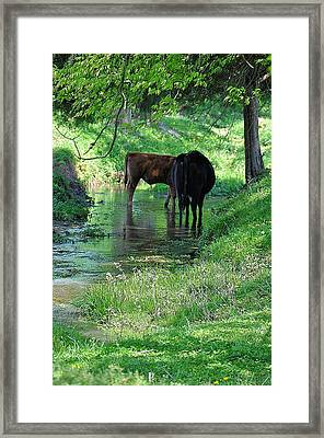Cooling Spring Framed Print by Jan Amiss Photography