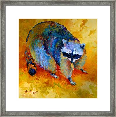 Coon Framed Print by Marion Rose