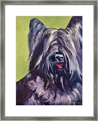 Cooper Framed Print by Terry Chacon