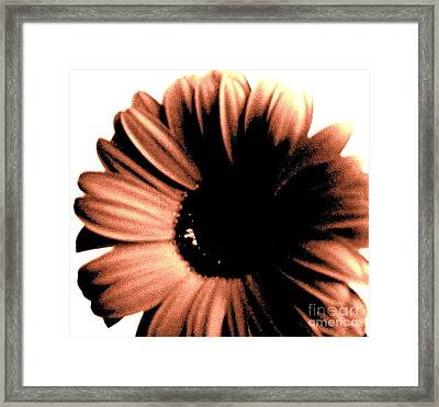 Copper Gerber Framed Print by Marsha Heiken