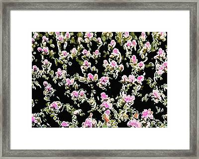 Coral Spawning  Framed Print by Lanjee Chee