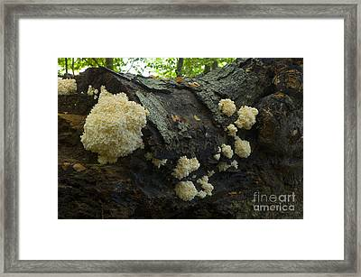 Coral Spine Fungus Framed Print by Steen Drozd Lund