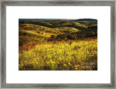 Coreopsis In The Arbuckles Framed Print by Tamyra Ayles