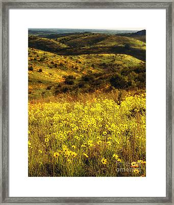 Coreopsis In The Arbuckles, Vertical Framed Print by Tamyra Ayles