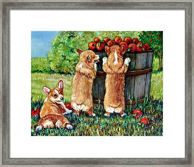 Corgi Apple Harvest Pembroke Welsh Corgi Puppies Framed Print by Lyn Cook