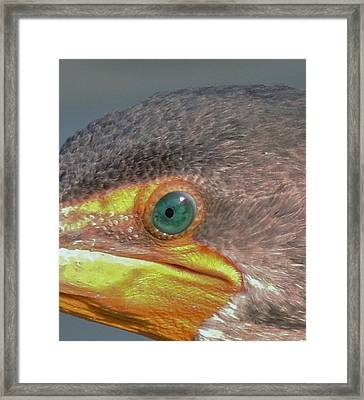 Cormarant 5 Framed Print by Todd Sherlock