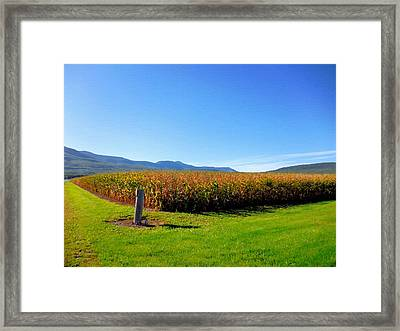 Corn Farm In Catskill 1 Framed Print by Lanjee Chee