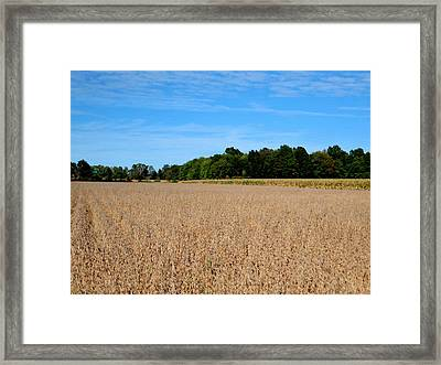 Corn Farm In Catskill 3 Framed Print by Lanjee Chee