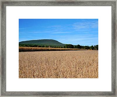 Corn Farm In Catskill 4 Framed Print by Lanjee Chee