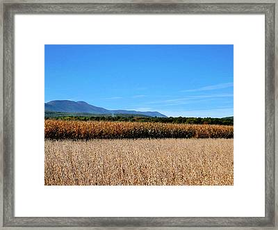 Corn Farm In Catskill 5 Framed Print by Lanjee Chee