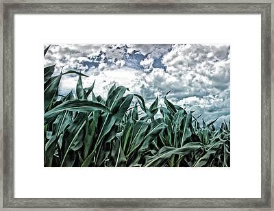 Corn Field 2 Framed Print by Bonnie Bruno
