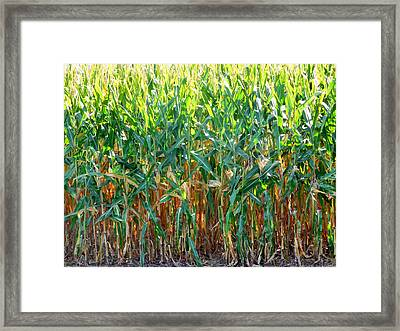 Corn Field Framed Print by Lanjee Chee