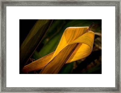 Corn Leaf Framed Print by Mah FineArt