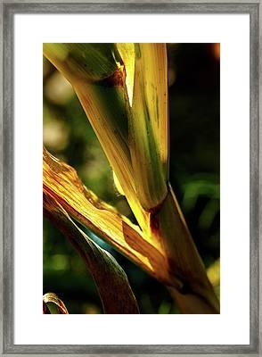 Corn Leaves Nr. 2 Framed Print by Mah FineArt
