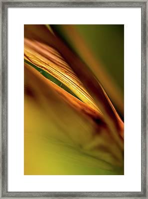 Corn Leaves Nr. 4 Framed Print by Mah FineArt