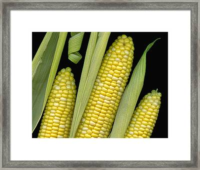 Corn On The Cob I  Framed Print by Tom Mc Nemar