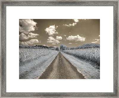 Cornfield Framed Print by Jane Linders