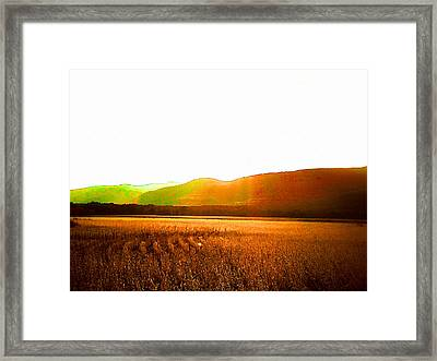 Cornfield On Bright Autumn Day 5 Framed Print by Lanjee Chee