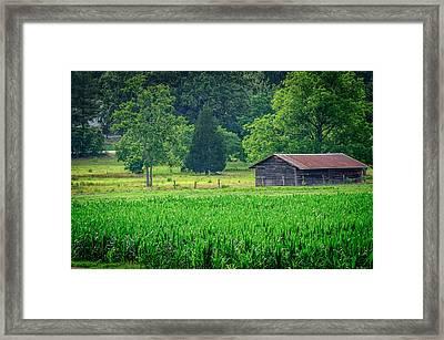 Cornfield Shed Framed Print by Billy Burdette