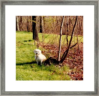 Cory Waiting For Master  Framed Print by Ruth  Housley