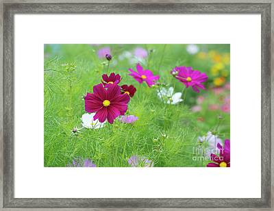 Cosmos Color Framed Print by Tim Gainey