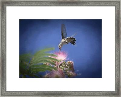 Cotton Candy Framed Print by Donna Kennedy