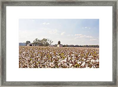 Cotton Crop Framed Print by Scott Pellegrin