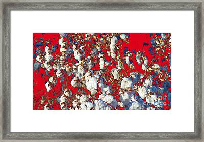 Cotton Red White Blue And You Framed Print by Feile Case