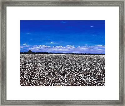 Cottonfields In Eastern Arkansas Framed Print by Cathy France