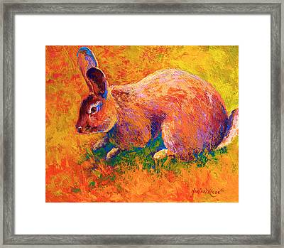 Cottontail I Framed Print by Marion Rose