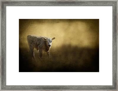 Country Calf Framed Print by Jai Johnson